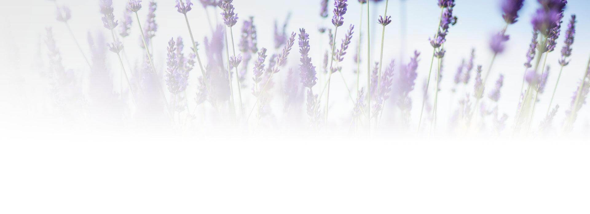Kwiaty zapachowe